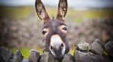 "Rav Kanievsky's Story: ""The Soul of Your Borrower Reincarnated in a Donkey"""