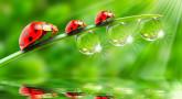 The Explosive Ladybird....
